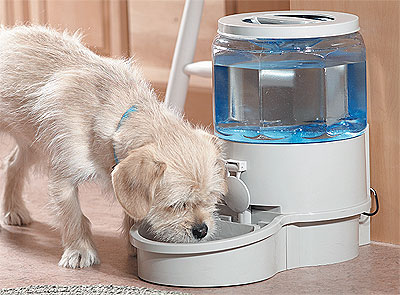 fresh water for dog