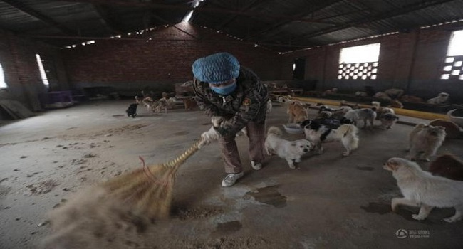 chinese-women-feed-1300-stray-dogs-8