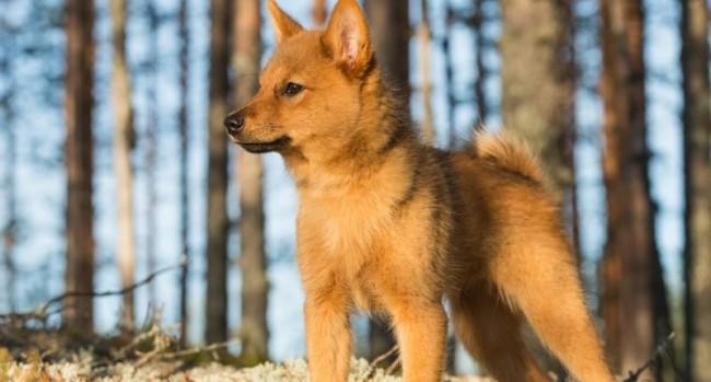 cute_dog_breed_12181_5026