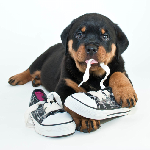 dog chewing habits
