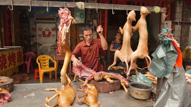 dog-days-of-yulin-1413235677974