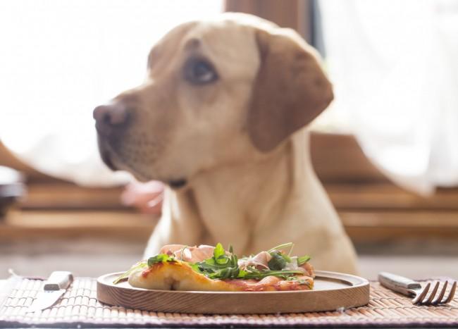 dog-eating-dinner