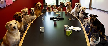 dog-office-meeting