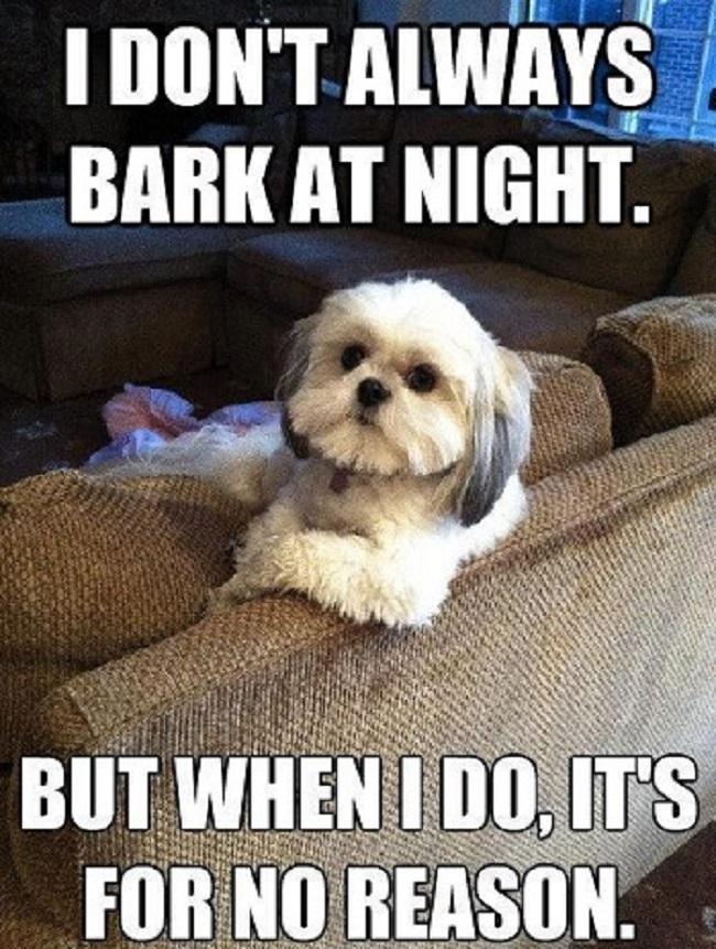 funny-dont-always-bark-dog-meme