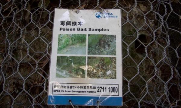 hong-kong-dog-poisonings