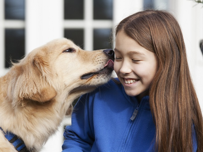 Golden retriever licking mixed race girl