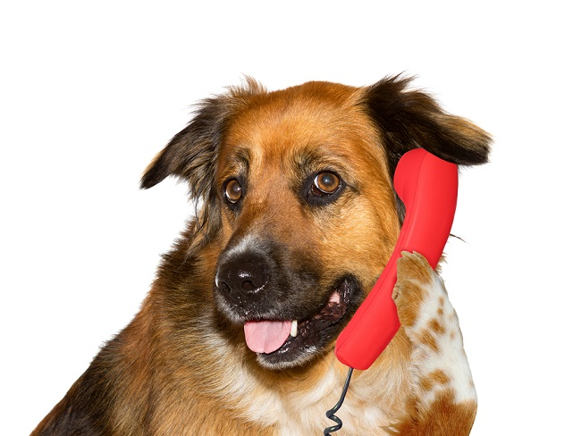 Dog talking on telephone, on white background