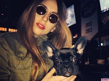 lady-gaga-french-bulldog-asia-instagram5-600x450