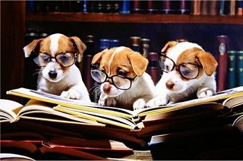 new-dog-parent-reading
