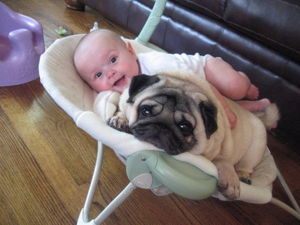 pug-and-child