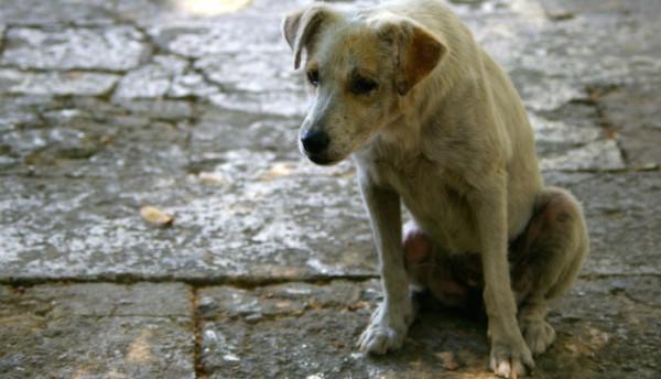 street-dog-wordlywagazine-1-696x399