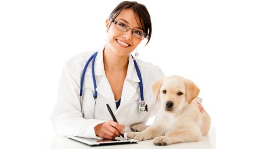 dog medical checkup