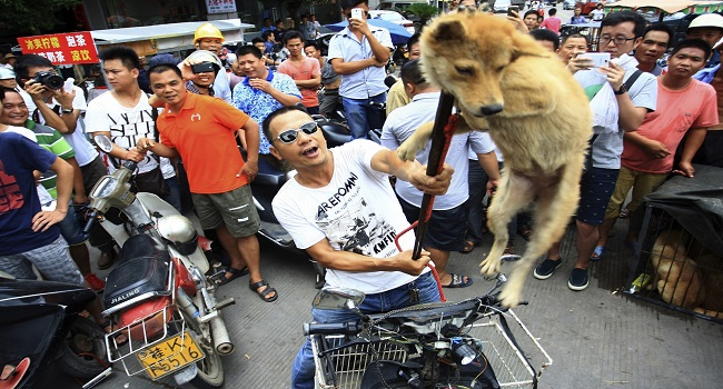 yulin-dog-meat