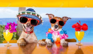 32316013-two-funny-dogs-drinking-cocktails-at-the-bar-in-a-beach-club-party-with-ocean-view-Stock-Photo