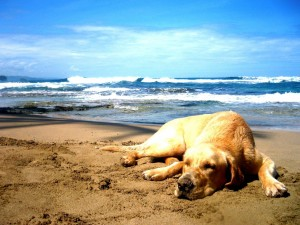 dog_chilling_at_the_beach