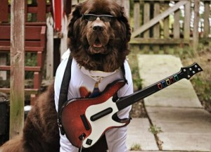 elvis-dog-costume-with-guitar