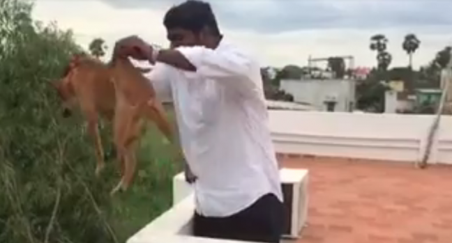 man-who-threw-dog-from-roof-identified-as-mbbs-student