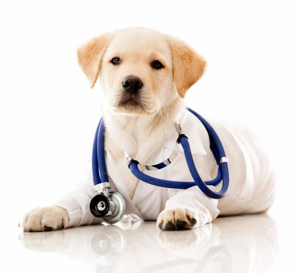 Parvo Virus- A Deady Bug In Dogs So Don t Wait- Vaccinate