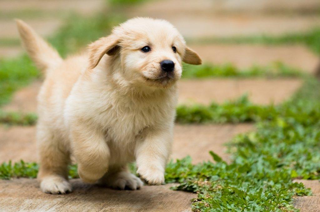 ELITE SQUAD KENNEL Dog Business Listing | DogSpot | 2212