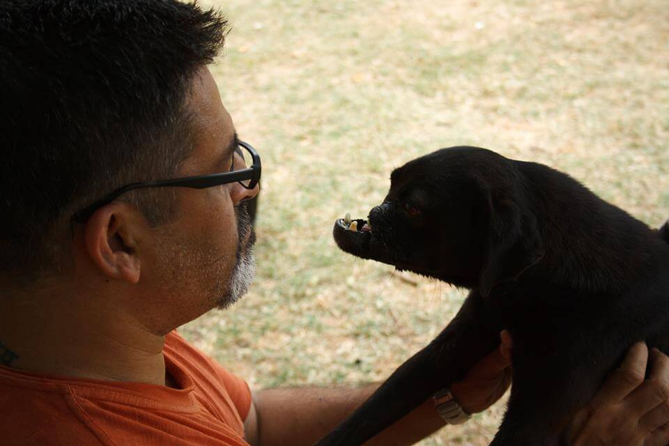 Heart Warming Story of Husna & Her Friends: The 5 Voice Of Stray Dogs Without Snouts