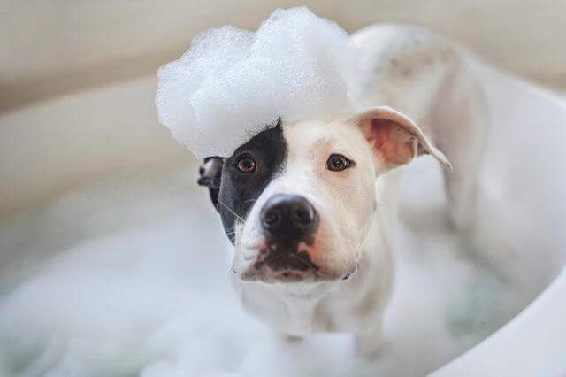 6 Easy DIY Natural Homemade Dog Shampoo Recipes For Your