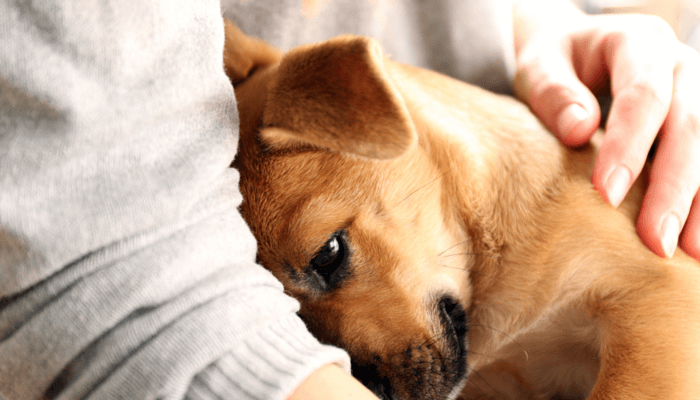 Canine Behaviour Counselling: A Midas Touch For Badly Behaved Dogs | Dogspot.in