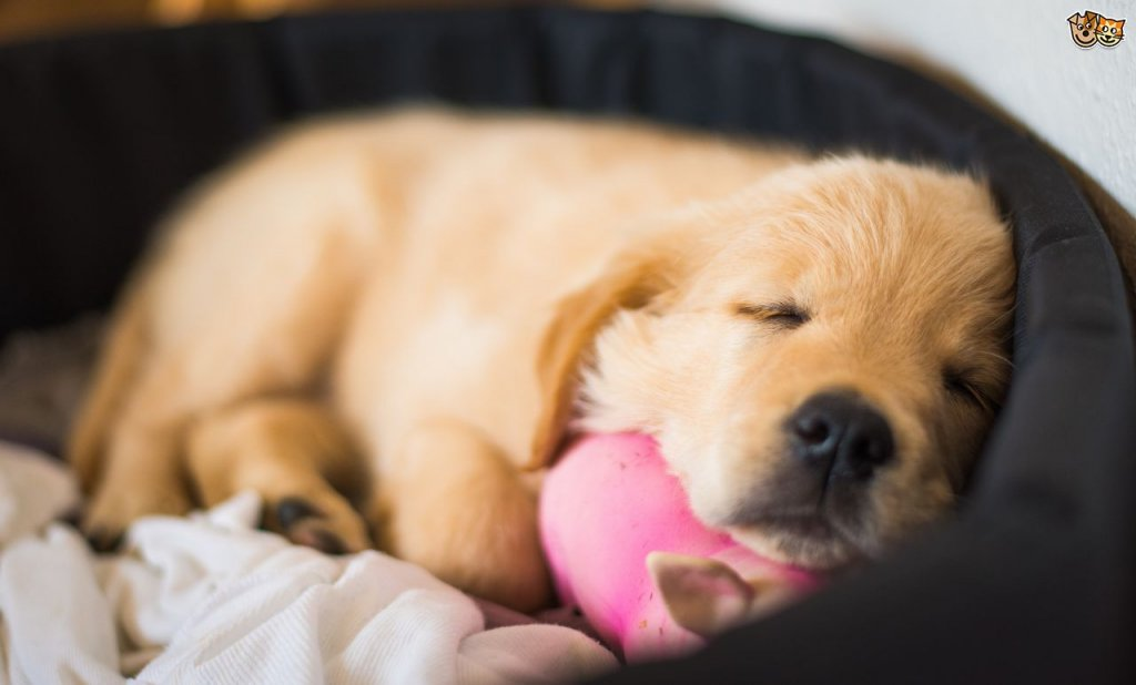 Guide To Getting You First Puppy Home | Dogspot.in